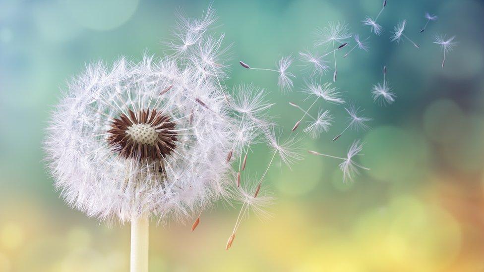 Pollen & Allergy Season